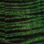 detail image 819a green figured strat
