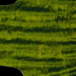 detail image lime curly strat scratchplate 807b